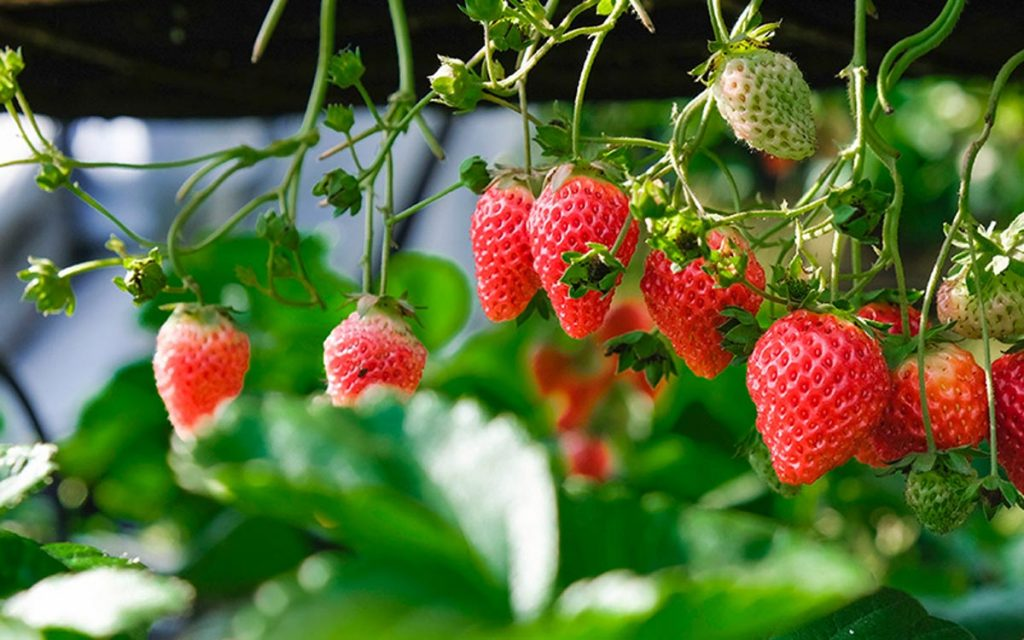 Productos Agropecurios - las rurales